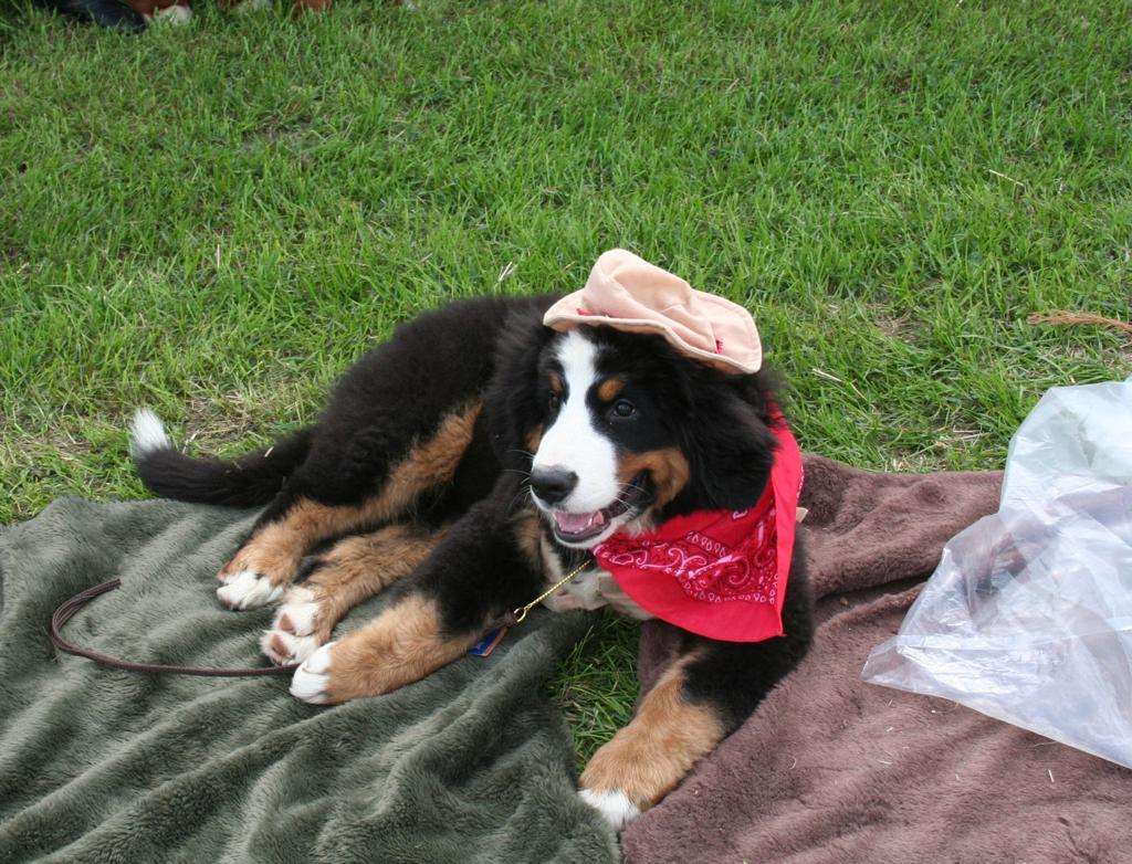 Longtime Dog Show Headed To Lake County Local News
