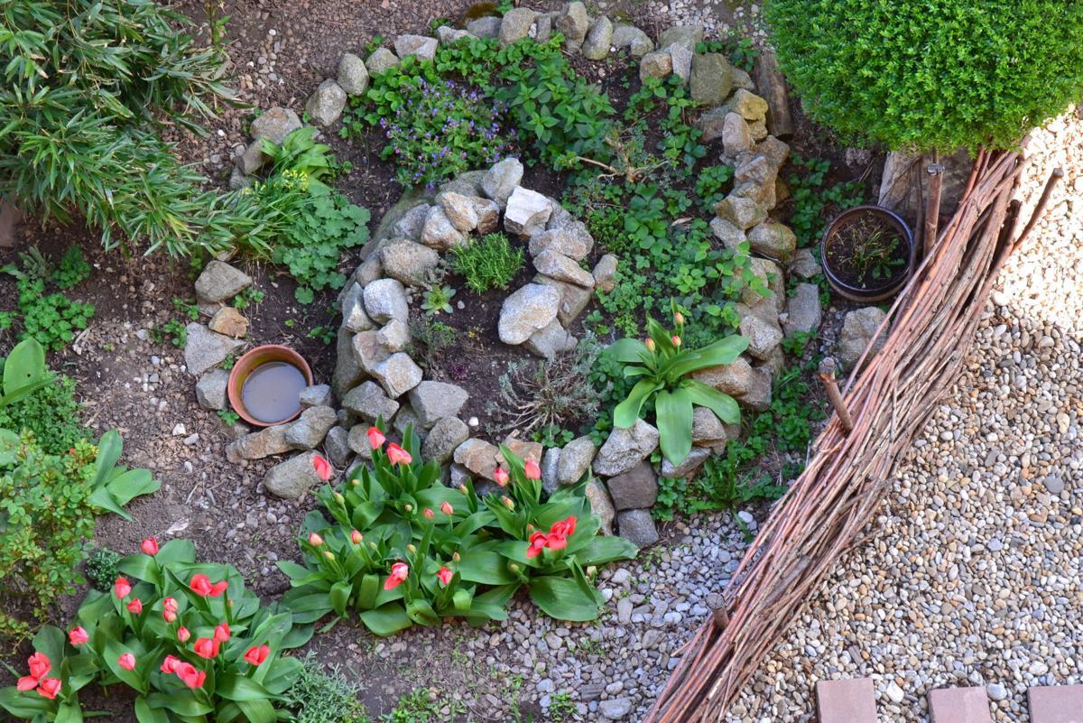 punzel-herb spiral