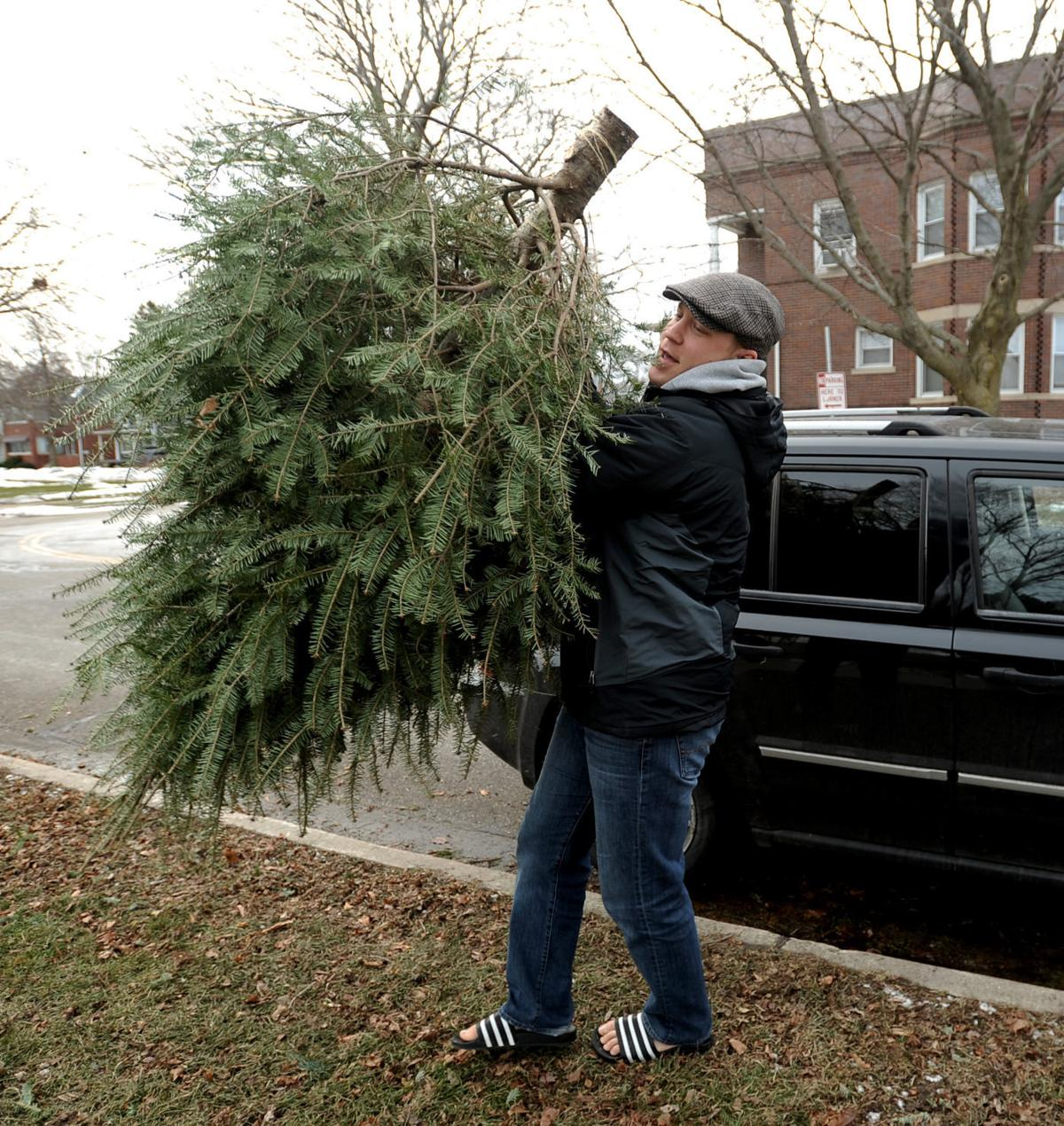 Disposing Of Christmas Trees: Kenosha, Pleasant Prairie Set Christmas Tree Disposal