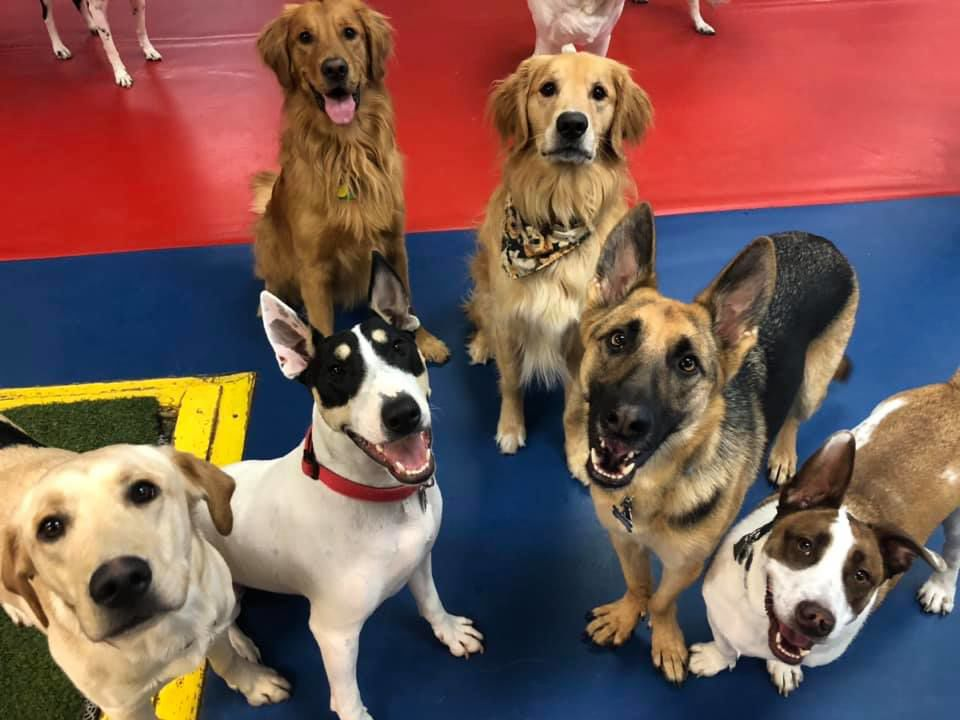 Best Of Kenosha 2019 Winners In The Pet Care West Of The I Categories Business Kenoshanews Com