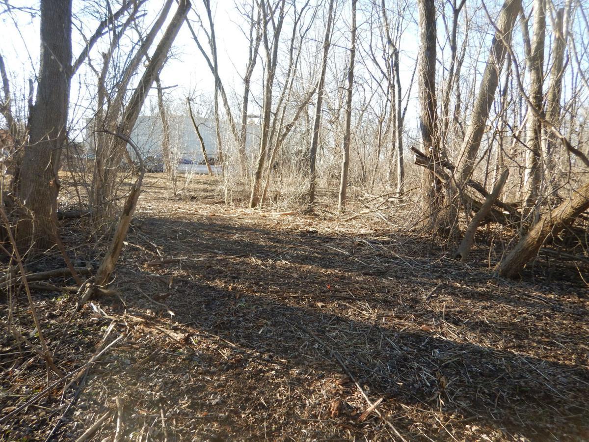 Neumiller Woods - Wetland Scrape (1).jpg