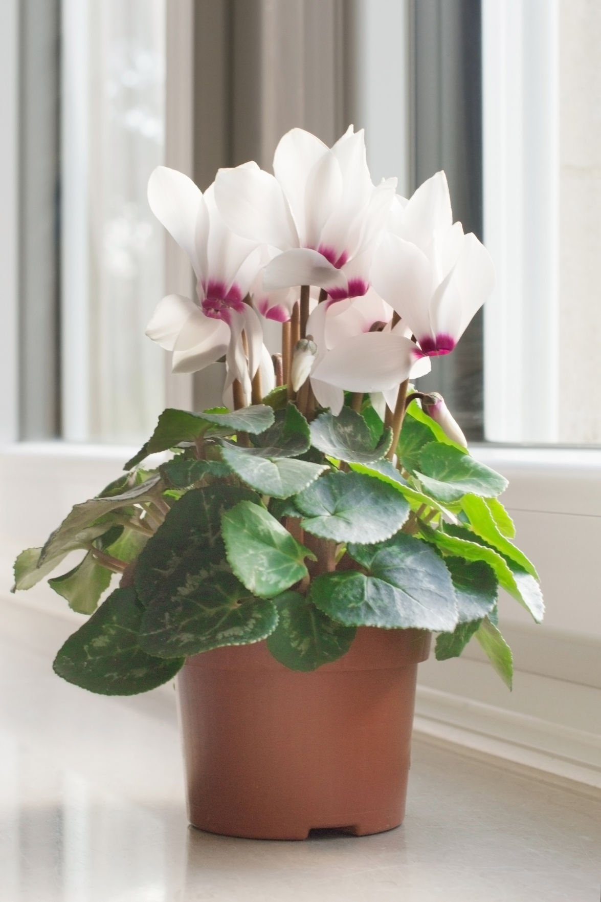 Kate Jerome: Keep your holiday plants looking great | Life ...