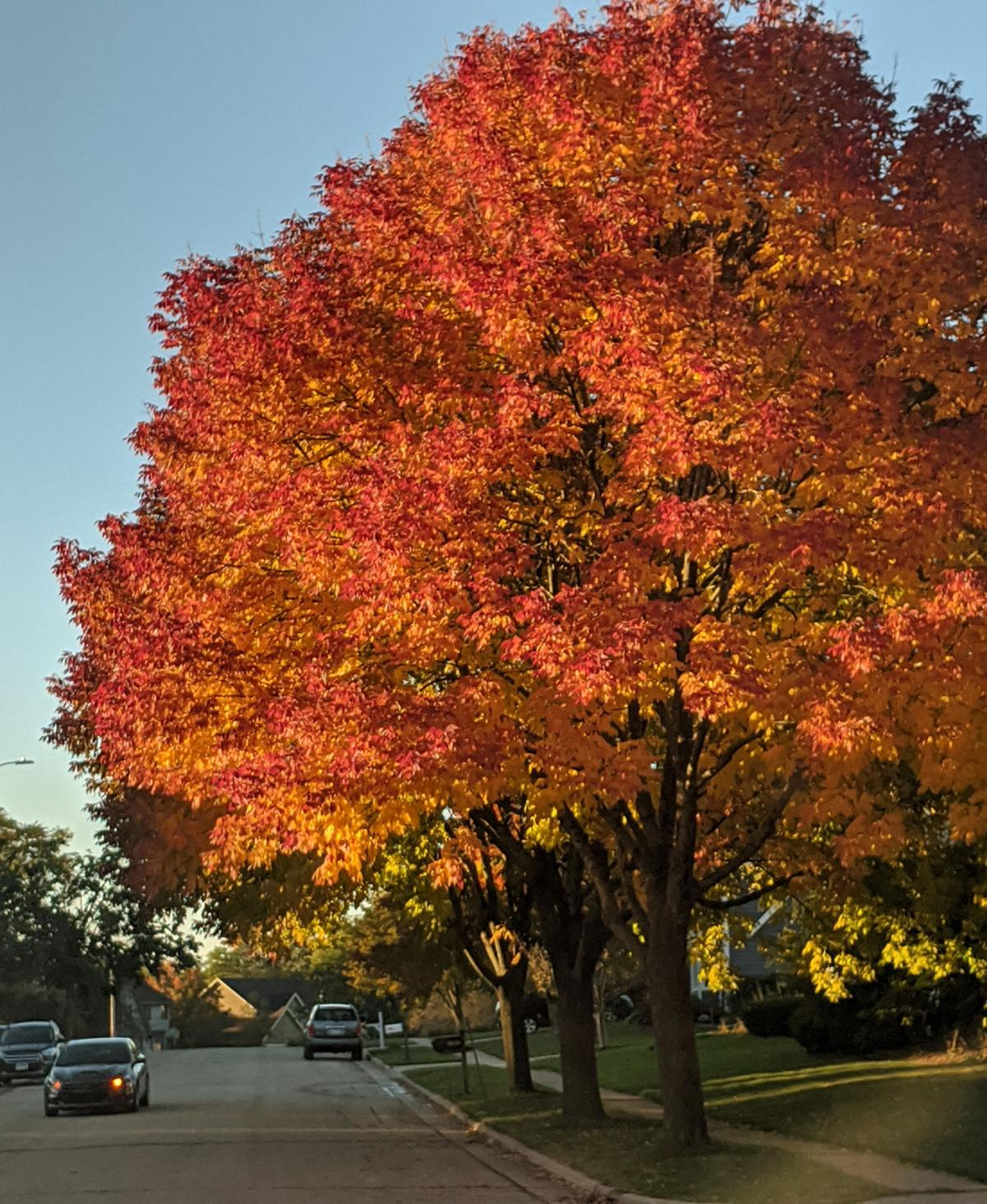 Kenosha fall color street