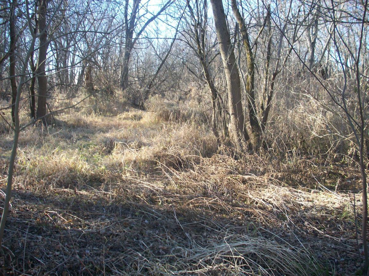Neumiller Woods - Before (4).jpg