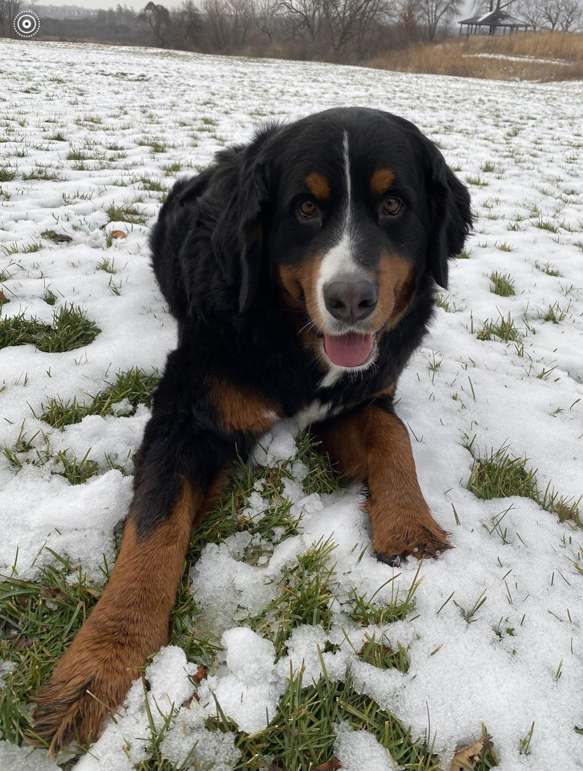 missing dog in Twin Lakes