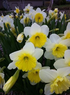 Plan, plant now for spring beauty