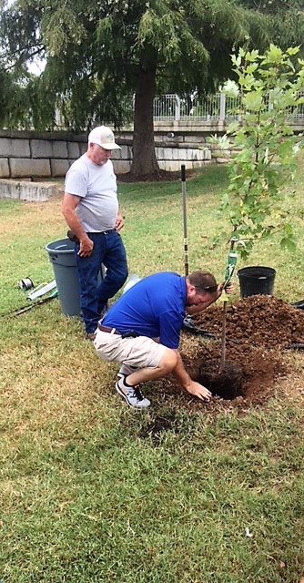 Celebrate trees, nature at Arbor Day Festival Saturday