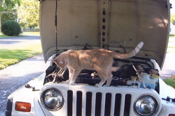 Cat tales: Chester loves things that go vroom