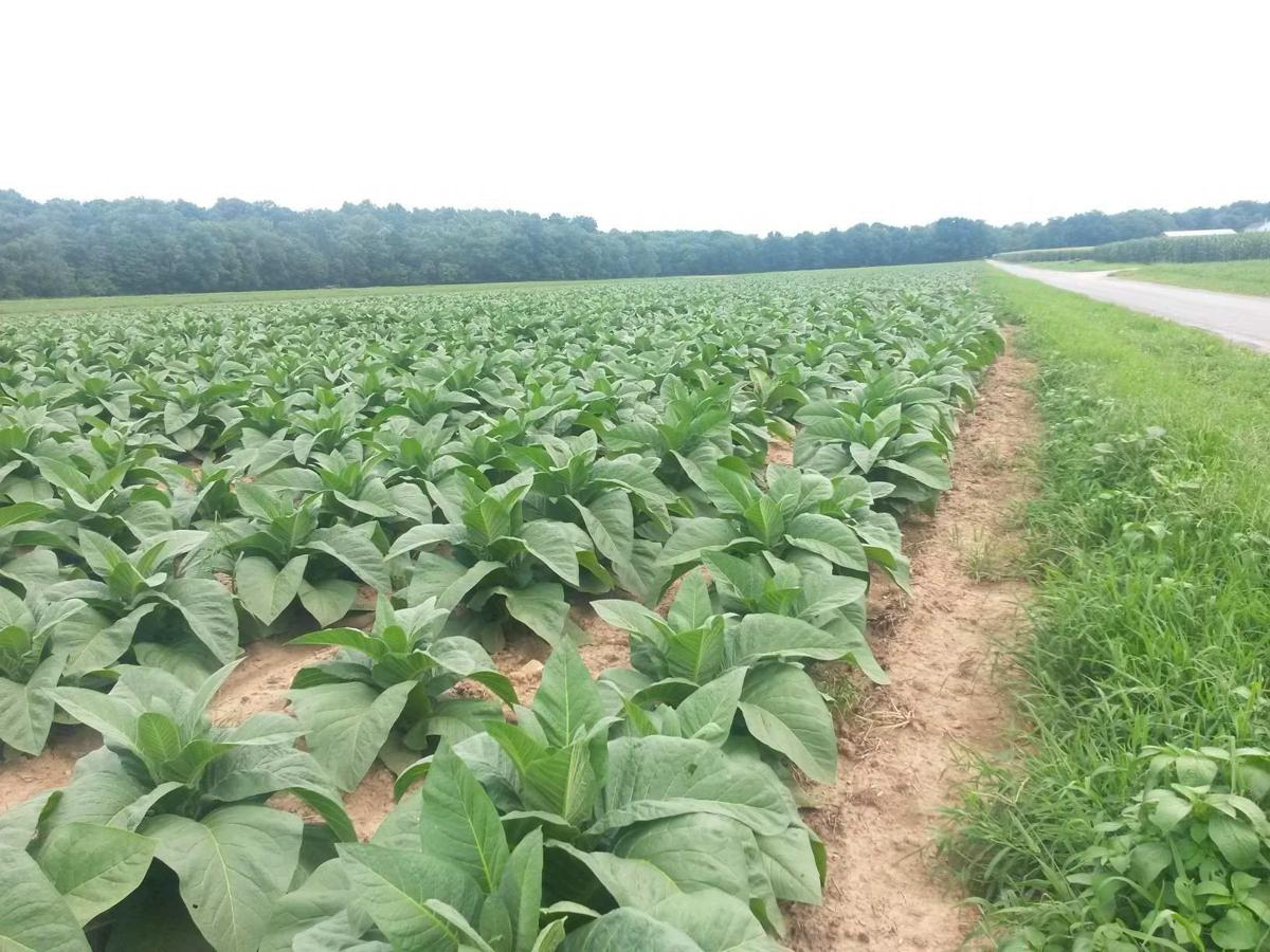 Training offers good practices to tobacco growers