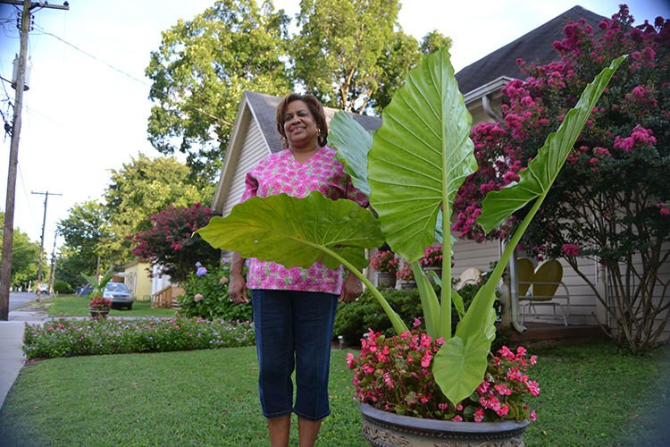 Hoptown Green Thumbs Container Plants Bring Life To Small Yard