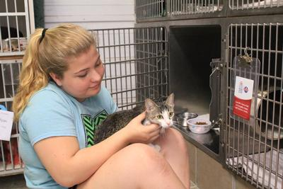 Humane Society waives fees on adult cats | Lifestyles