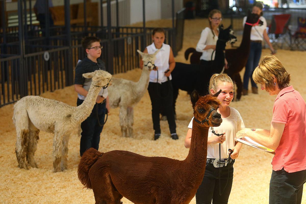 Llama and Alpaca Show 02.jpg