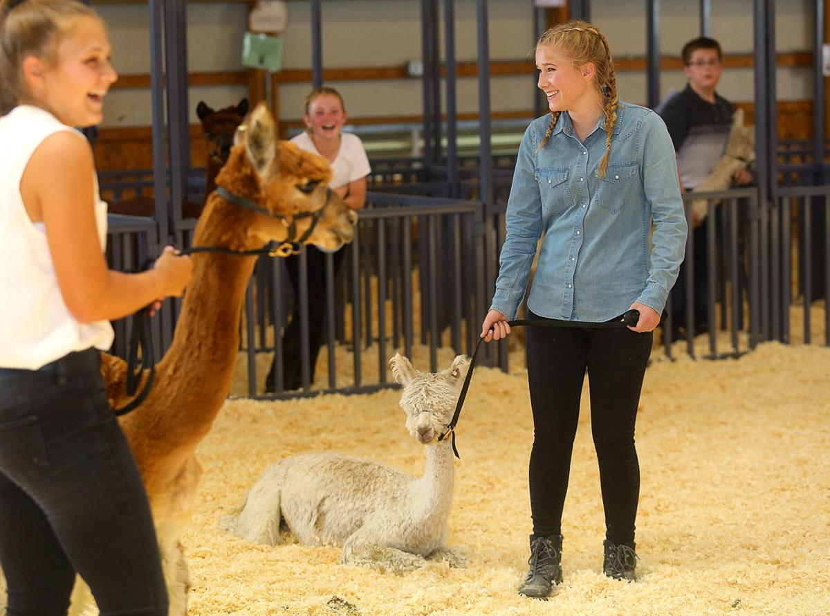 Llama and Alpaca Show 11.jpg