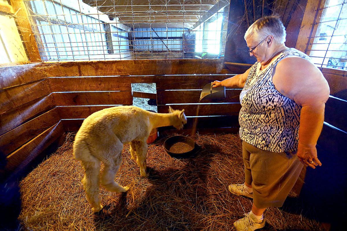 Alpaca Farm 05.jpg