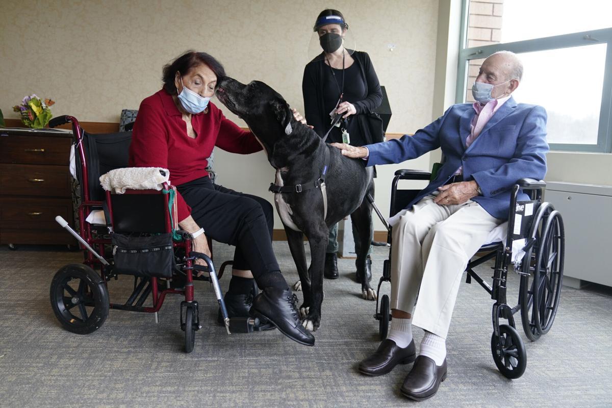 Virus Outbreak One Good Thing Four-legged Comforts