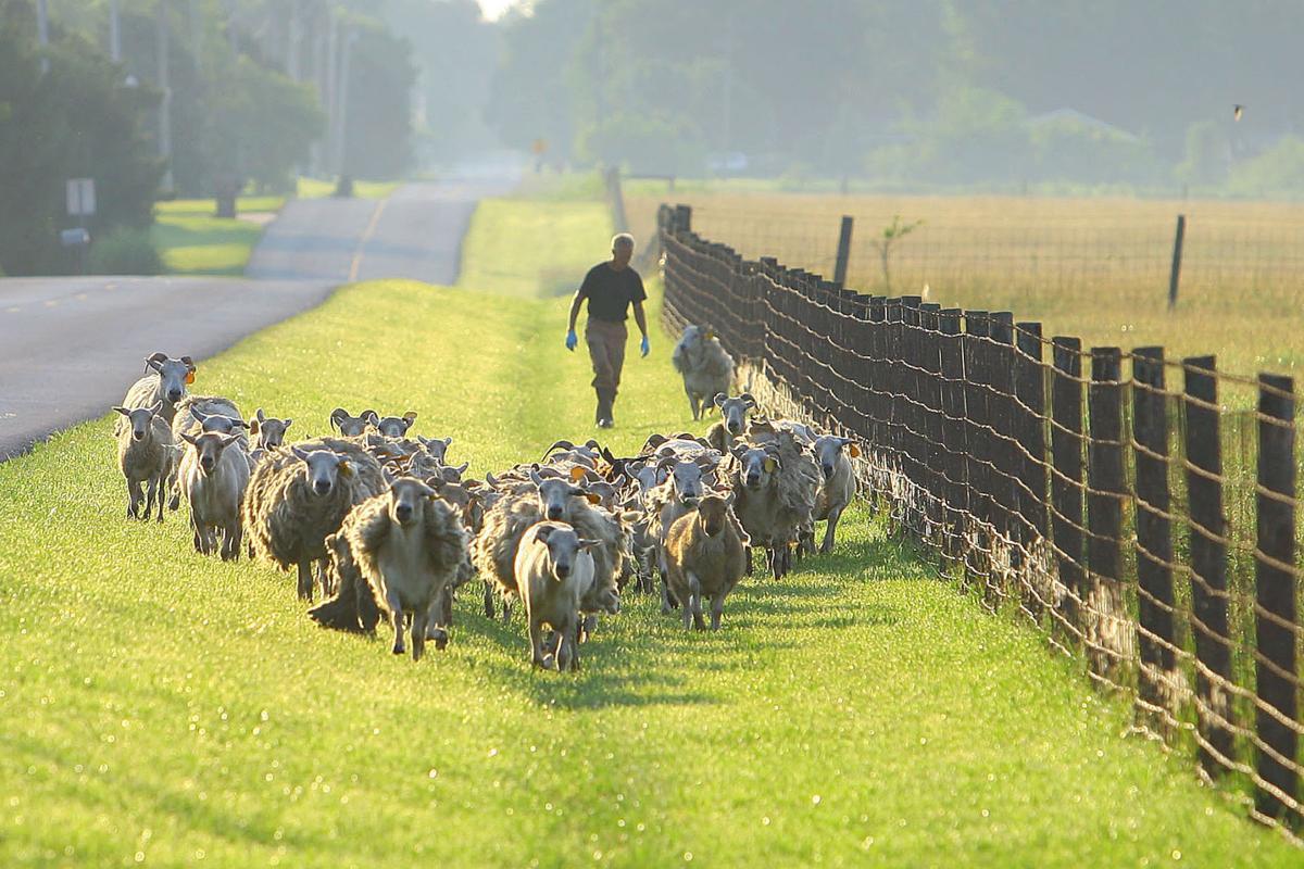 RC Ripberger Farm
