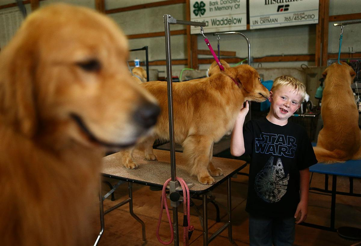 Little Fort Kennel Club Dog Show