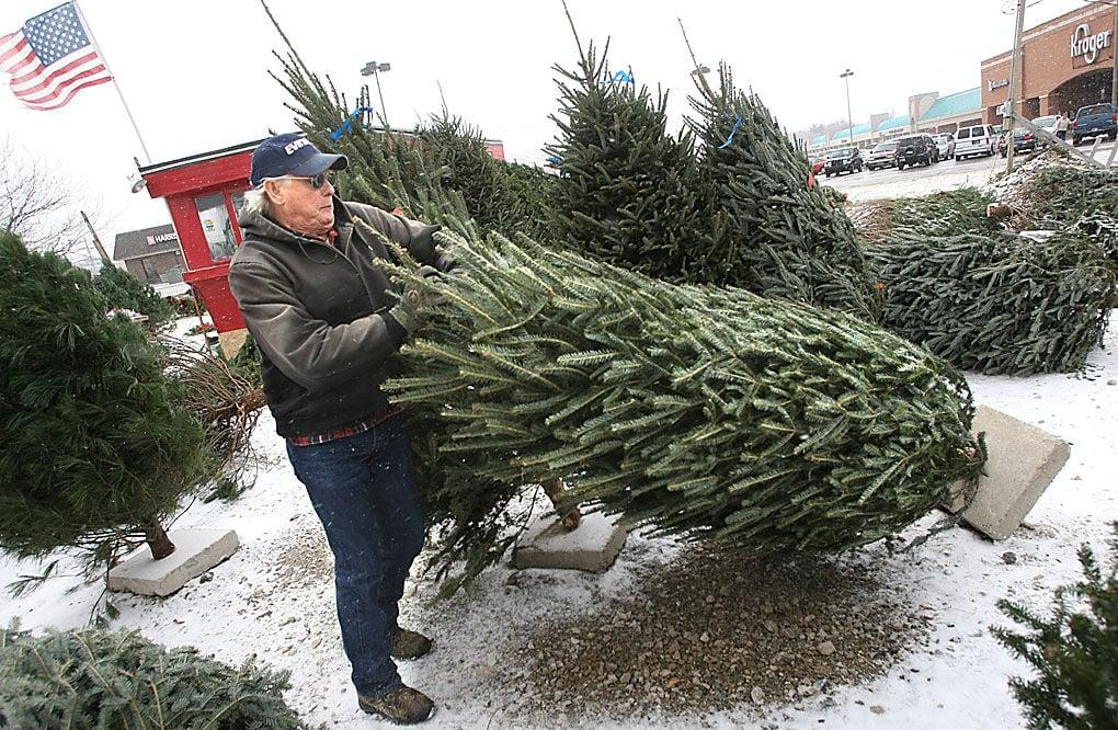 shes a beauty dallas thomas jr prepares a tree for a customer at his live christmas tree lot at the corner of lincoln road and washington street