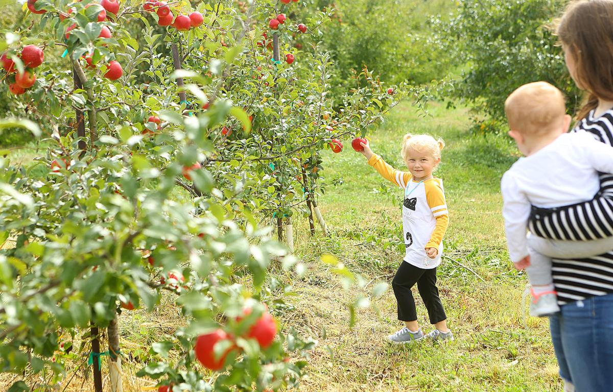 Doud's Orchard 05.jpg