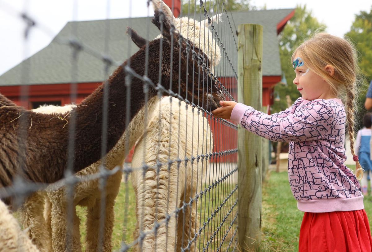 Fall 4 Alpacas Farm Day 01.jpg