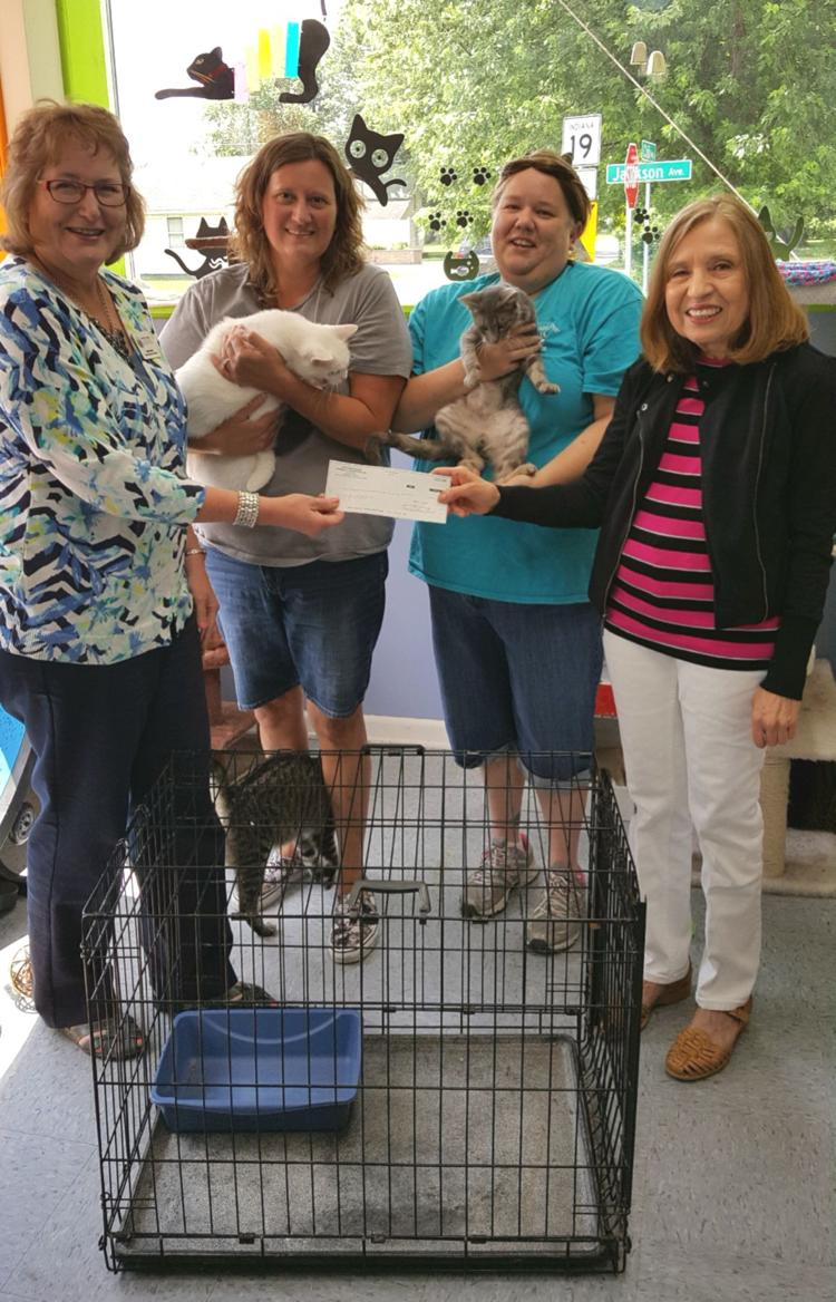 Cat Shelter Gets New Cages