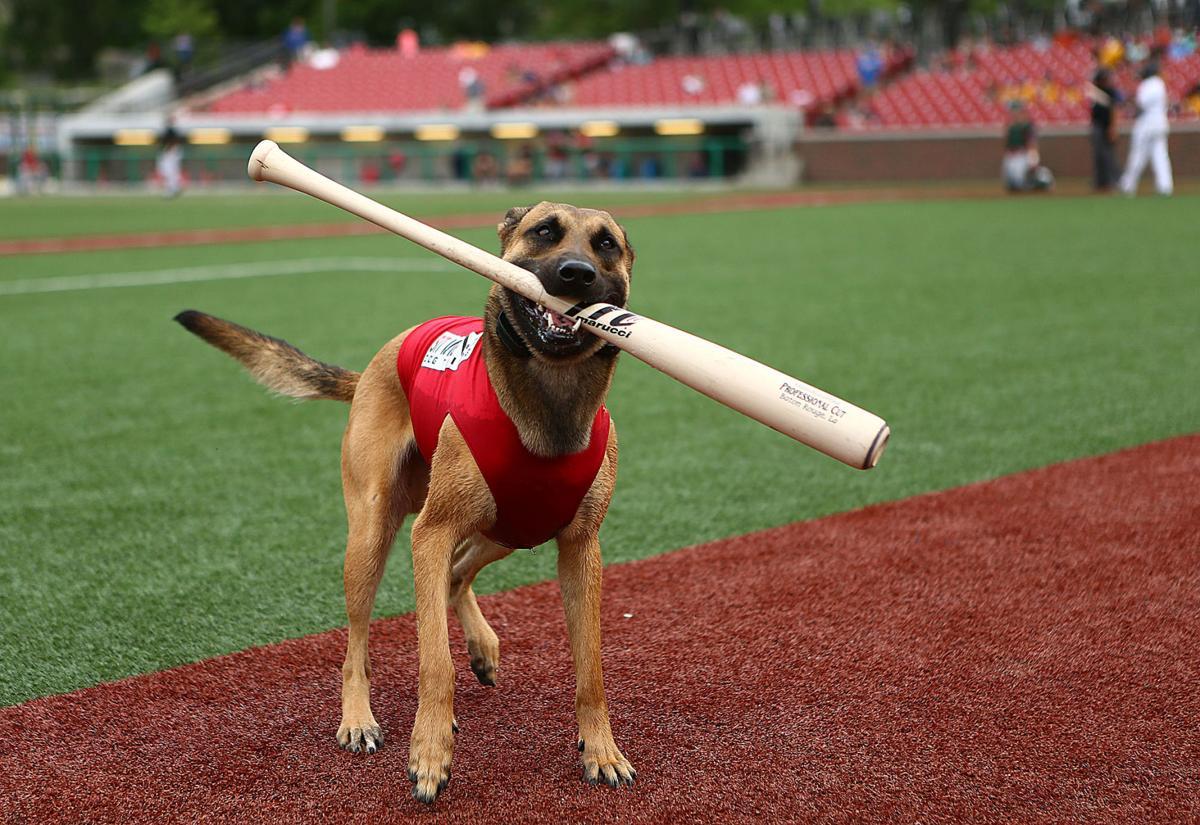 Navi the bat dog 04.jpg