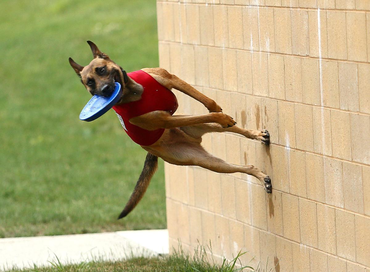 Navi the bat dog 13.jpg