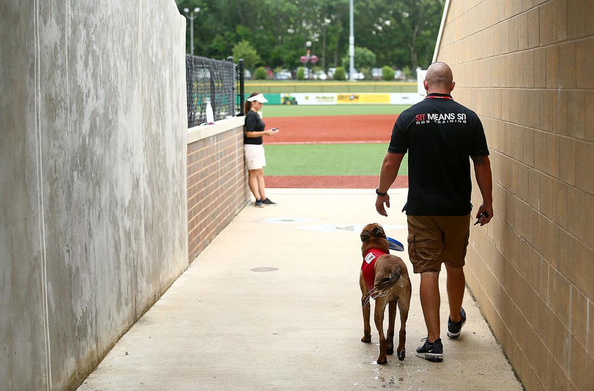 Navi the bat dog 14.jpg