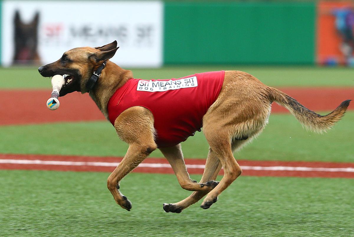 Navi the bat dog 15.jpg