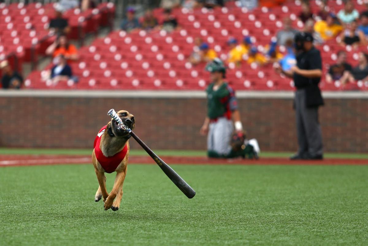Navi the bat dog 05.JPG