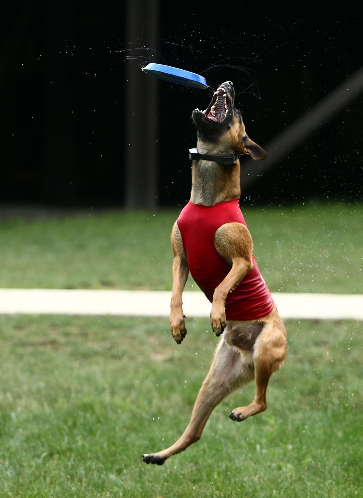 Navi the bat dog 12.JPG