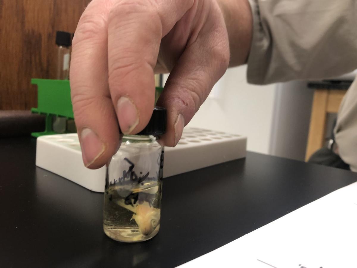 Parasites infecting fish