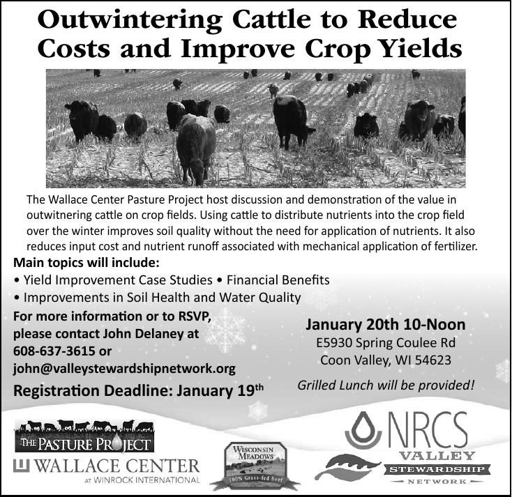 Outwintering Cattle