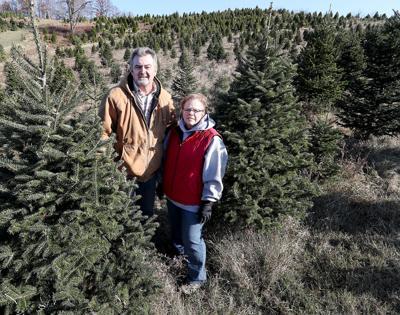Pederson's Christmas Tree Farm