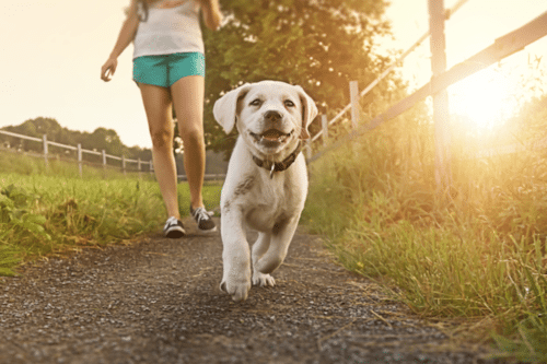 The 100 Most Popular Dog Names