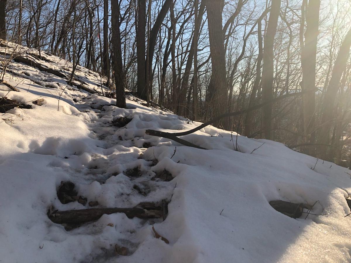 Rogue Trail