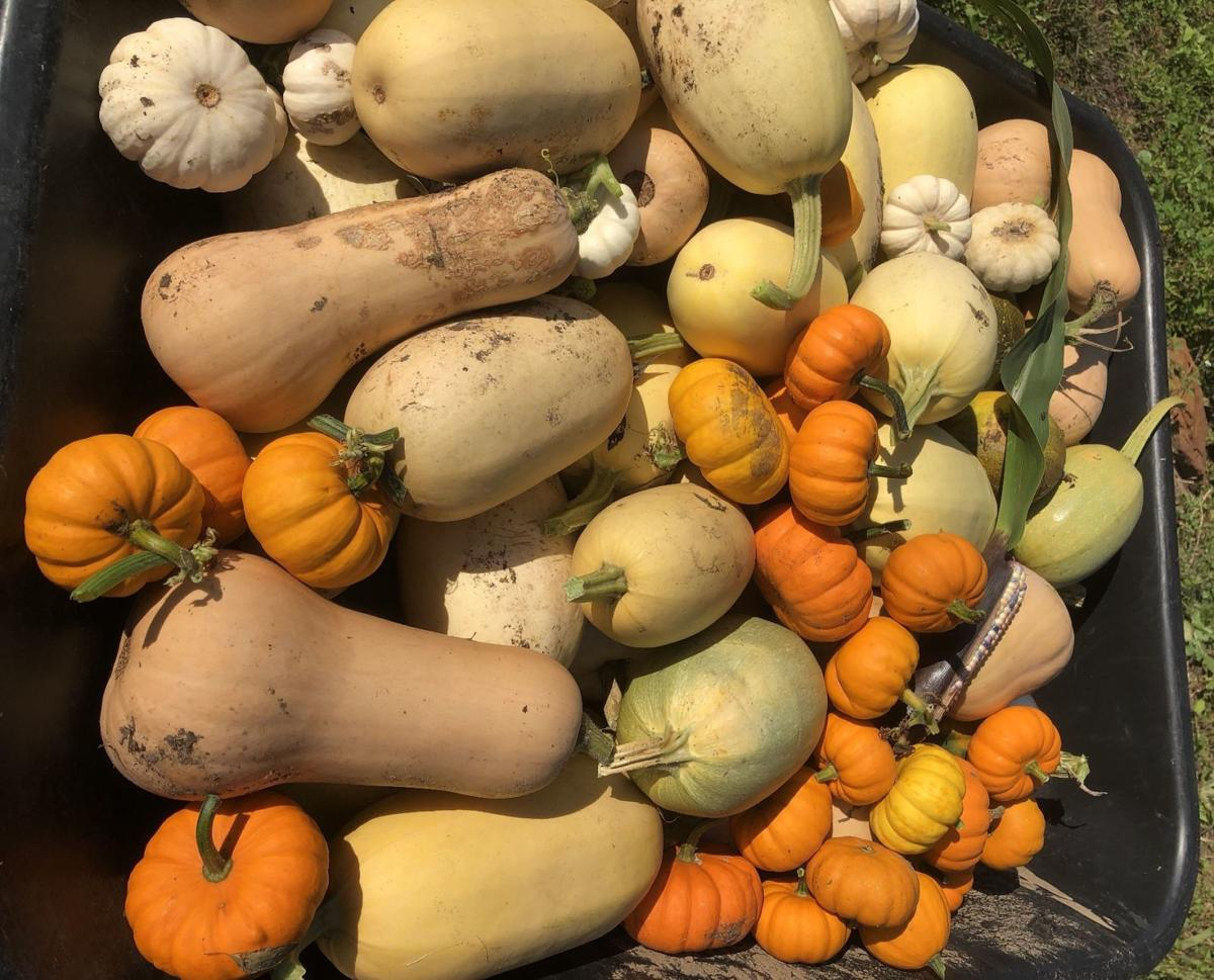 Harvest for fall