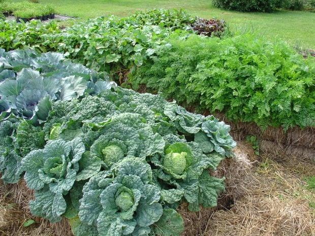 Straw Bale Gardening An Easy Bountiful Method