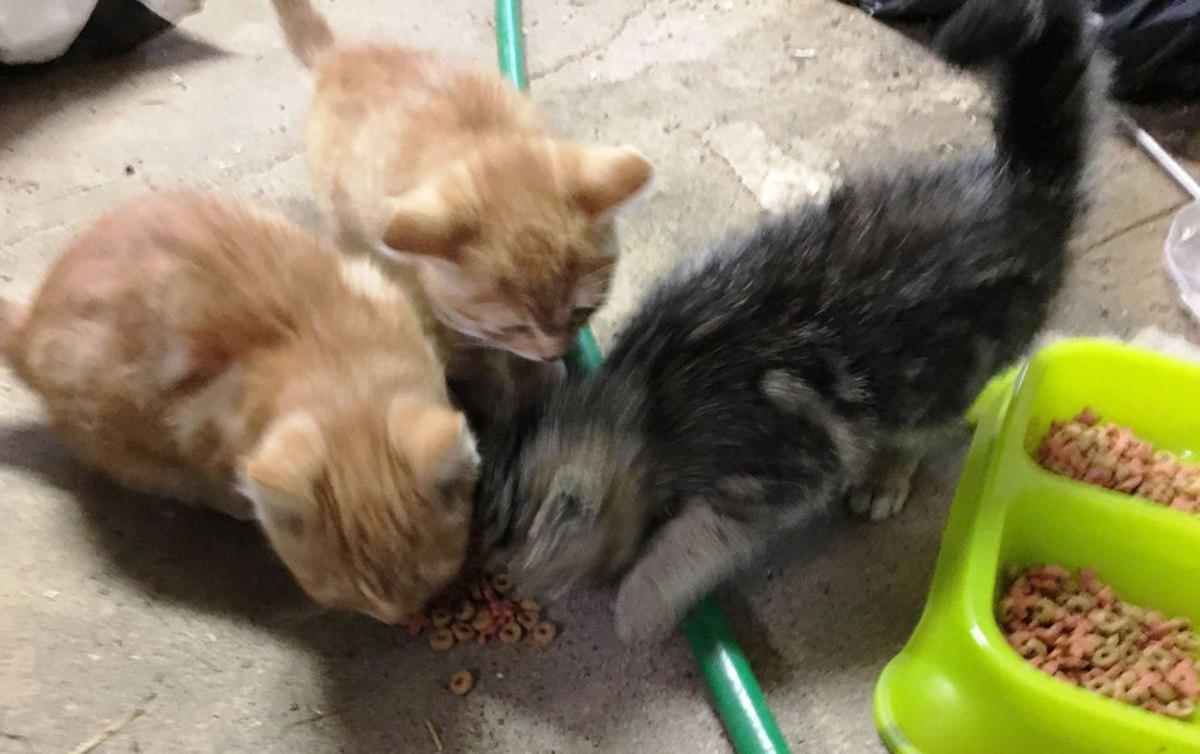 Chris Har Decades later cats are still a farm staple