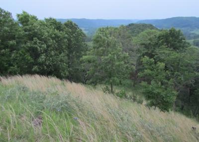 Oak savanna at Tunnelville Cliffs State Natural Area