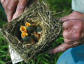 Brice Prairie group happy about bluebird comeback