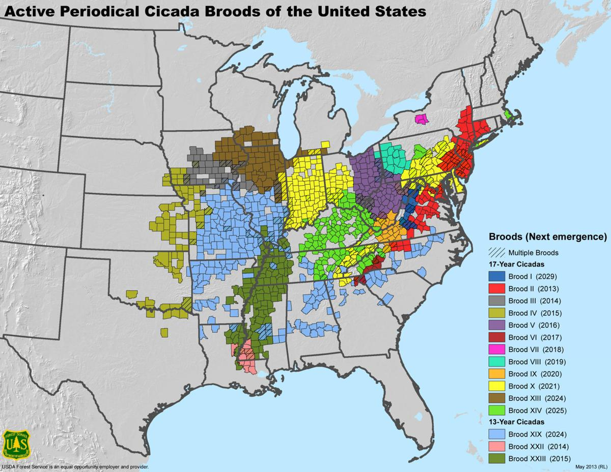 Active Periodical Cicada Broods of the United States