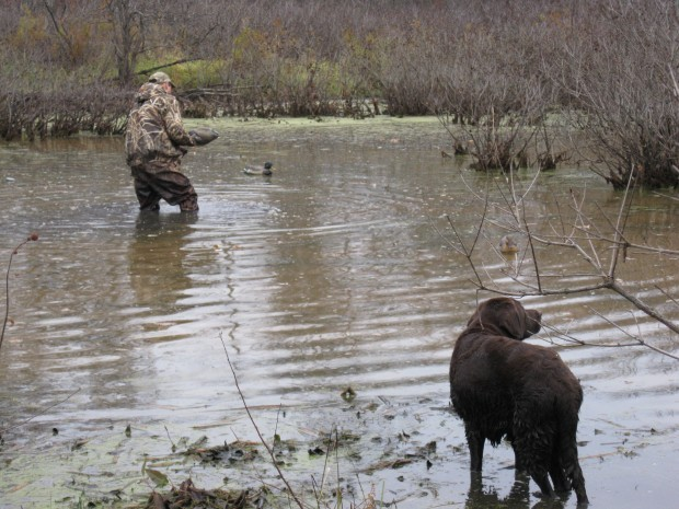 Duck hunting in the backwaters of the Mississippi | Sports