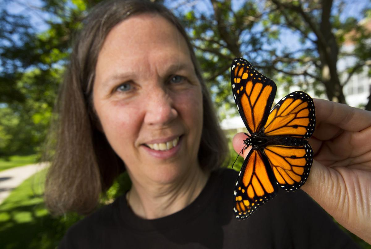 Federal pollinator plan needs a billion milkweed plants for monarch ...