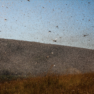 1874: Year of the Locusts