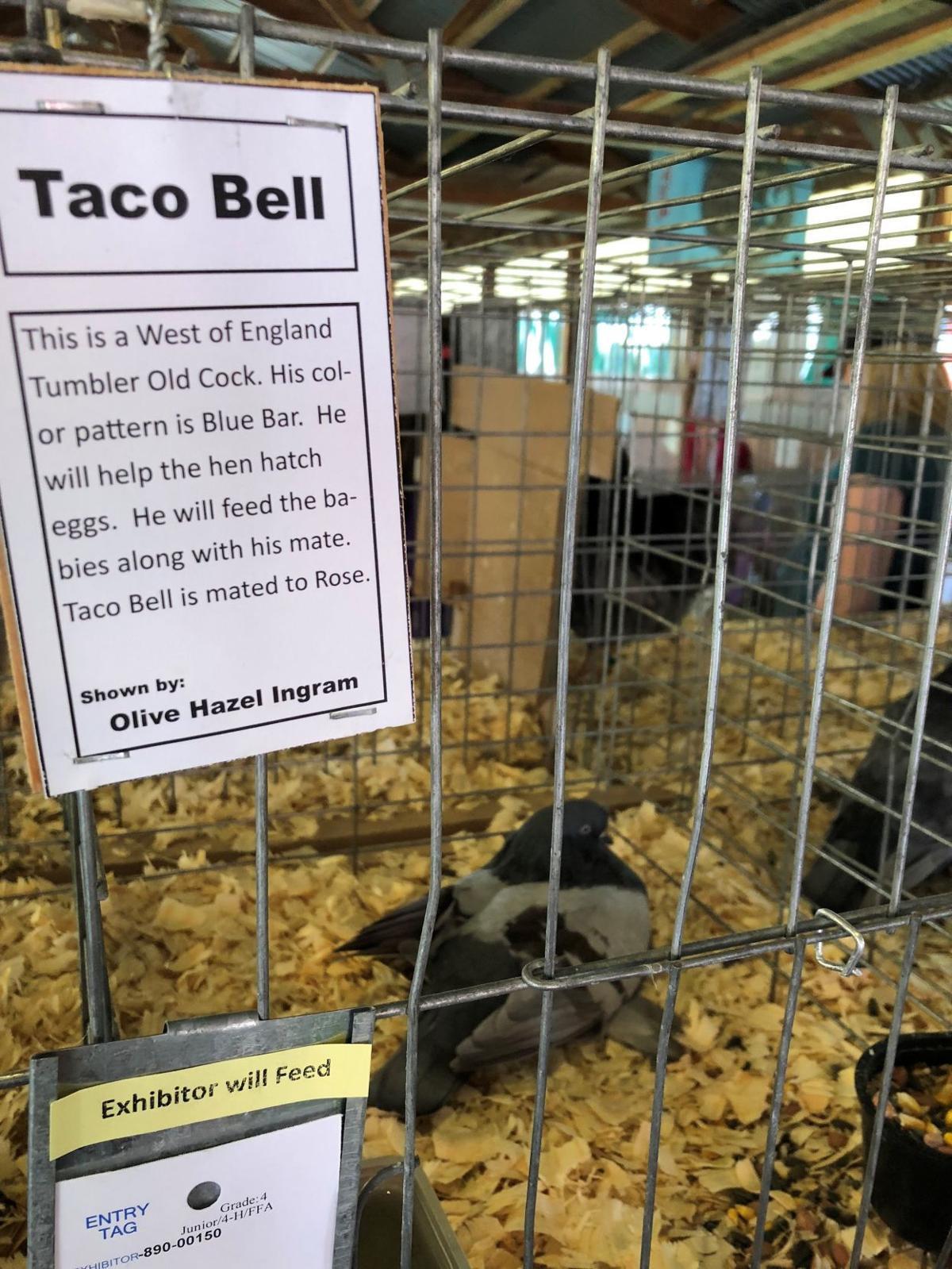 Photos: 2018 La Crosse Interstate Fair in West Salem | Local ...