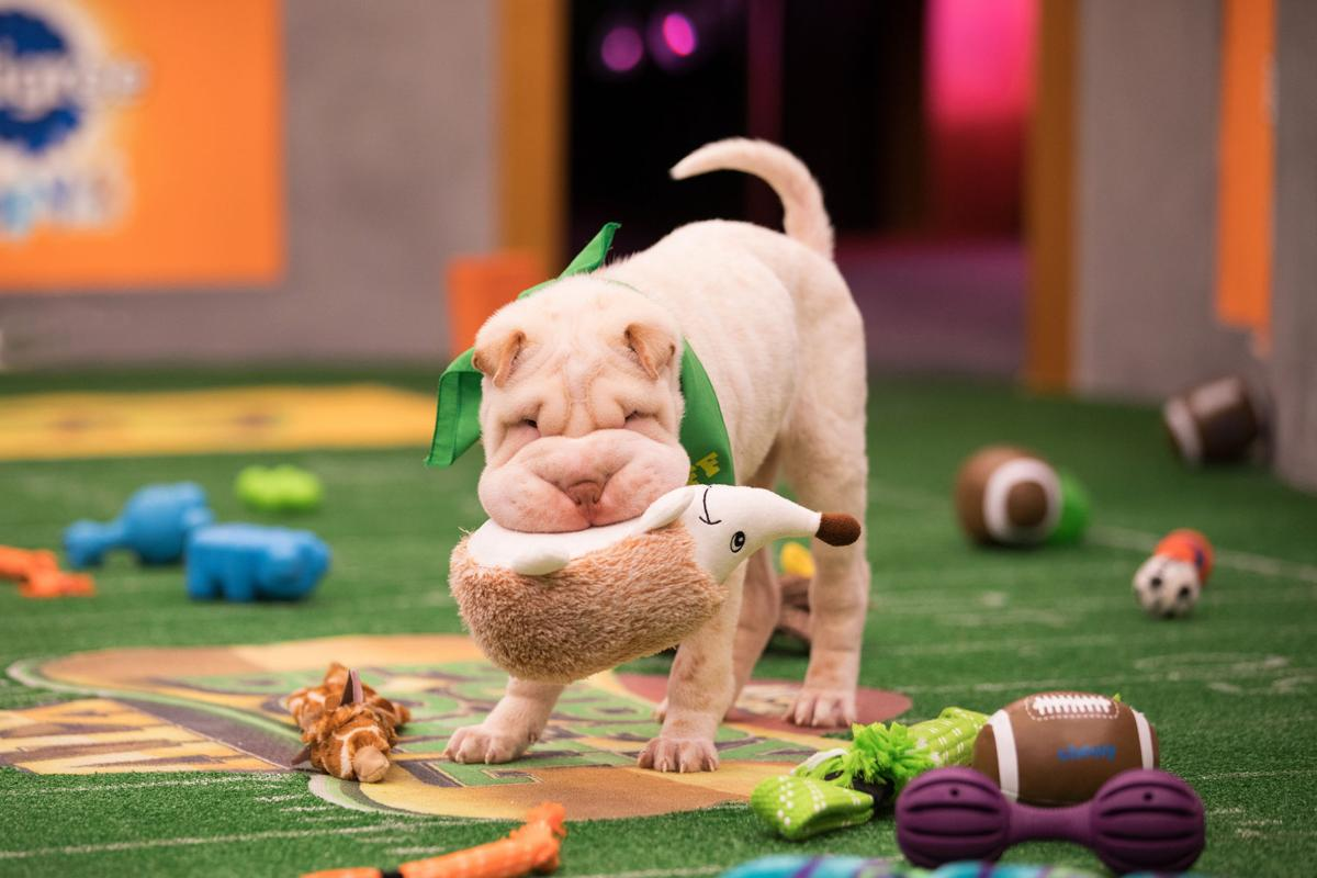 ENTER TV-PUPPYBOWL 2 LA