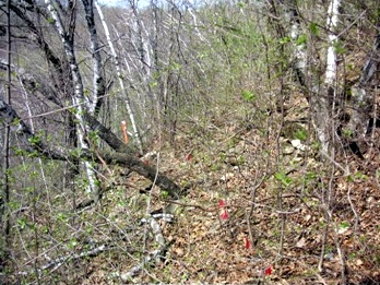 Vista Trail before