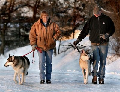 State, county officials look to regulate wolf-dog hybrids | Local