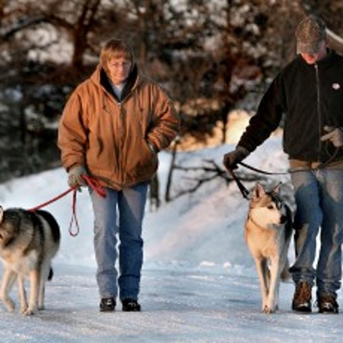 State, county officials look to regulate wolf-dog hybrids